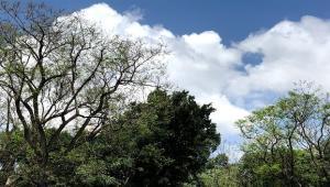 """הרצאה במסגרת הקולוקוויום: """"מרחב המחייה של עצים בערי ישראל""""."""